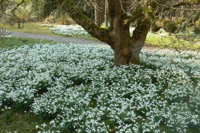 Craufurdland Castle Scottish Snowdrop Festival